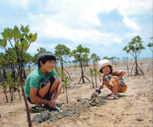 マングローブ植樹